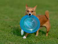 DiscDog-Events-Presse26k